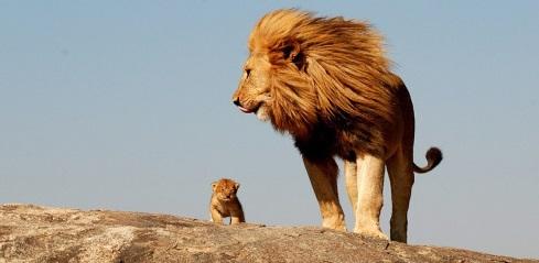 Kết quả hình ảnh cho chó điên và sư tử